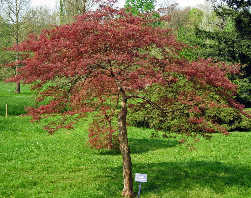 Can ash trees be saved